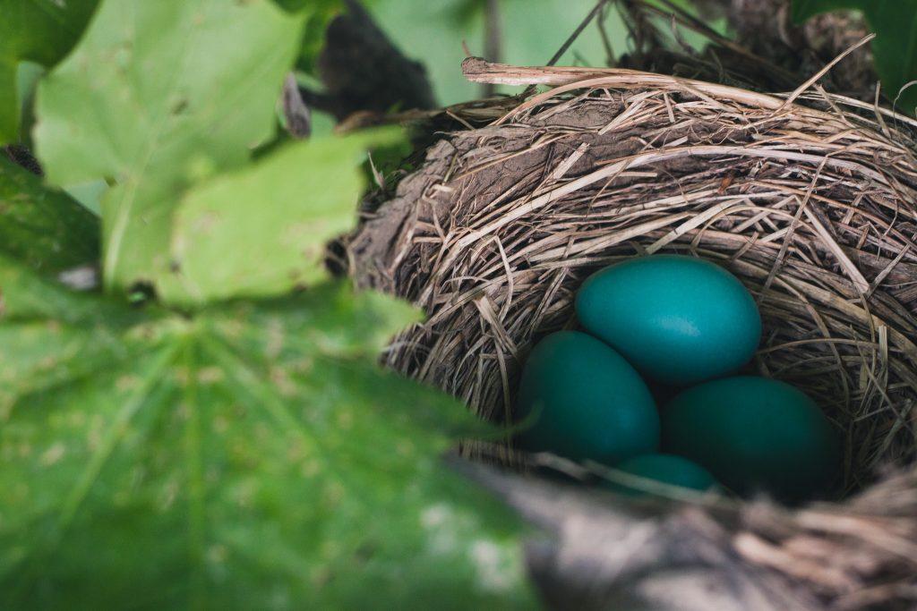 logiciel calcul ovulation